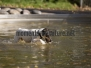 Hundeschwimmen Hemer 2017