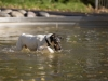 2017-10-14_Hundeschwimmen_Bild-001