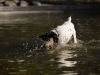 2017-10-14_Hundeschwimmen_Bild-002