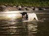 2017-10-14_Hundeschwimmen_Bild-003
