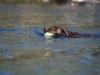 2017-10-14_Hundeschwimmen_Bild-005