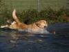 2017-10-14_Hundeschwimmen_Bild-022