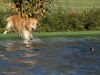 2017-10-14_Hundeschwimmen_Bild-023
