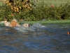 2017-10-14_Hundeschwimmen_Bild-025