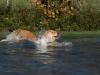2017-10-14_Hundeschwimmen_Bild-030