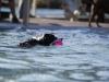2017-10-14_Hundeschwimmen_Bild-034