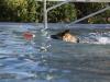 2017-10-14_Hundeschwimmen_Bild-035
