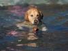 2017-10-14_Hundeschwimmen_Bild-040