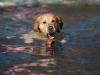 2017-10-14_Hundeschwimmen_Bild-041