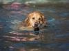 2017-10-14_Hundeschwimmen_Bild-042