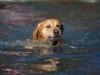 2017-10-14_Hundeschwimmen_Bild-043