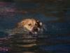 2017-10-14_Hundeschwimmen_Bild-044