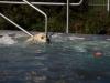 2017-10-14_Hundeschwimmen_Bild-047
