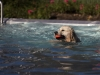 2017-10-14_Hundeschwimmen_Bild-050