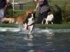 2017-10-14_Hundeschwimmen_Bild-053