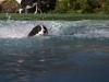 2017-10-14_Hundeschwimmen_Bild-055