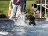 2017-10-14_Hundeschwimmen_Bild-056