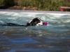 2017-10-14_Hundeschwimmen_Bild-057