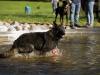 2017-10-14_Hundeschwimmen_Bild-059