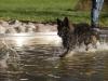 2017-10-14_Hundeschwimmen_Bild-061