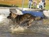 2017-10-14_Hundeschwimmen_Bild-064