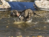 2017-10-14_Hundeschwimmen_Bild-065