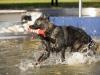 2017-10-14_Hundeschwimmen_Bild-067