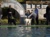 2017-10-14_Hundeschwimmen_Bild-071