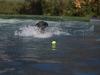 2017-10-14_Hundeschwimmen_Bild-076