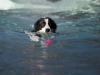2017-10-14_Hundeschwimmen_Bild-079