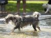 2017-10-14_Hundeschwimmen_Bild-081