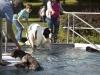 2017-10-14_Hundeschwimmen_Bild-086
