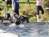 2017-10-14_Hundeschwimmen_Bild-089