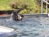 2017-10-14_Hundeschwimmen_Bild-091