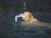 2017-10-14_Hundeschwimmen_Bild-092