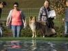 2017-10-14_Hundeschwimmen_Bild-093