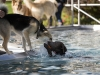 2017-10-14_Hundeschwimmen_Bild-094