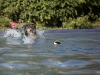 2017-10-14_Hundeschwimmen_Bild-100