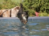 2017-10-14_Hundeschwimmen_Bild-101