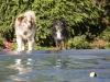 2017-10-14_Hundeschwimmen_Bild-102