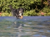 2017-10-14_Hundeschwimmen_Bild-103