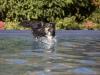 2017-10-14_Hundeschwimmen_Bild-104