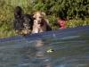 2017-10-14_Hundeschwimmen_Bild-108