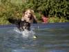2017-10-14_Hundeschwimmen_Bild-110