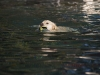 2017-10-14_Hundeschwimmen_Bild-111