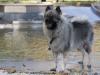 2017-10-14_Hundeschwimmen_Bild-115