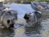 2017-10-14_Hundeschwimmen_Bild-116