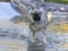 2017-10-14_Hundeschwimmen_Bild-118