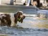 2017-10-14_Hundeschwimmen_Bild-131