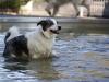 2017-10-14_Hundeschwimmen_Bild-132